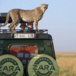 Zara-Tours-Safari